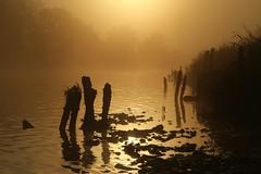 Fog by the River Exe (matt.clark25) Tags: river dawn sunrise mist fog autumn reflections reflection exe devon groyne groynes silhouette