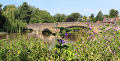 The Old Bridge, Aylesford, Kent (Ray in Manila) Tags: aylesford kent england village unitedkingdom bridge river medway maidstone oldbridge historic scenic willow countryside peaceful 1250 eos650d green