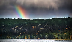 Fall Rainbow (George Stenberg Photography) Tags: washingtonstate pacificnorthwest hoodcanal rainbow clouds trees fallcolors