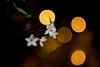 Carl Zeiss Jena Biotar 2/58 (::Lens a Lot::) Tags: carl zeiss jena biotar 58mm f2 10 blades m42 night bokeh depth field street photography flower color blue pink red yellow green vintage manual prime lens german profondeur de champ extérieur effet plante fleur carlzeissjena