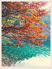 Autumn in North  Italy (amos.locati) Tags: amos locati autunno autumn tree arbre copac colori