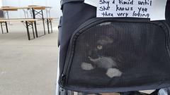 Riggs Beer Company Pet Adoption Day (Hospice Hearts) Tags: hospicehearts wwwhospiceheartsorg urbana champaign illinois il nonprofit animalrescue adopt volunteer rescue riggsbeercompany wwwriggsbeercom communitymobilecatsterilizationclinicpetadoptionday october152015 101516 saturday dogs dog cat cats foster feline felines
