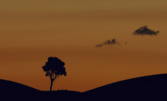 Tree & clouds (hbothmann) Tags: cretesenesi toskana toscana tuscany baum tree sunrise sonnenaufgang