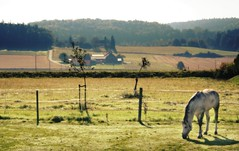 Auf der Weide (One-Basic-Of-Art) Tags: pferd horse ausblick landschaft landscape weich sanft unscharf schimmel farbe color colorful farbig 1basicofart anne woyand fotografie photography canon canoneos canoneos350d littledoglaughedstories