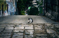 Old street new cat (Master Iksi) Tags: cat street concrete building old outdoor graffiti sidewalk beograd belgrade srbija serbia dramatic amazing beautiful lights