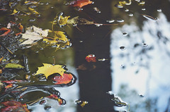 Puddle (Evangelina M) Tags: puddle water shadows autumn leaves rain