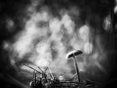 Champignon (steph20_2) Tags: mushroom champignon panasonic lumix m445 gh3 macro closeup proxy monochrome monochrom noir noiretblanc ngc blanc black bw white skanchelli