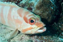 DSC03357-30.jpg (chasingphil) Tags: diving southeastasia similanislands thailand