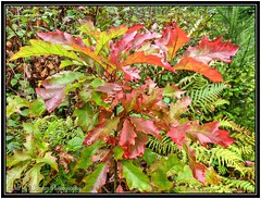 Autumn Foliage 05 (M.J.Woerner) Tags: nature forest autumn fall light foliage leaves october colors november forestry herbst fallcolors natural plant season leaf outdoor colorful brown orange park wood gold wilderness vegetation glossy