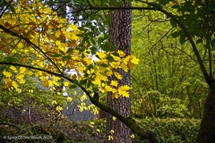On An Awesome Autumn Day (jimgspokane) Tags: autumn fall parks spokanewashingtonstate nikonflickraward