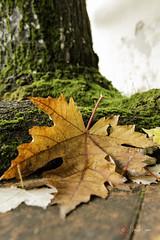 Magic autumn (Ciervo Marcello) Tags: canoneos650d colori sigma1750 autunno profonditdicampo photography