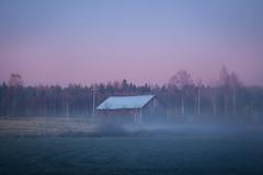 Atmosphere (Olli Tasso) Tags: barn fog mist field farm peaceful serene quiet calm pink autumn fall october night suomi finland usva sumu landscape scenery maisema rural countryside lempl pirkkala