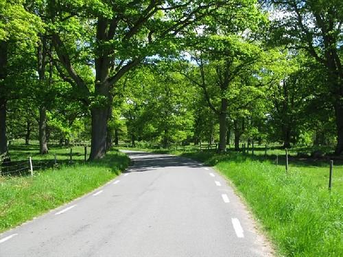 Vägen mellan Stenum och Axvall 2010(1)