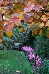 Overbecks, Salcombe (Georgie Kyriacou) Tags: overbecks salcombe devon southdevon garden nationaltrust autumn leaves england bench frame