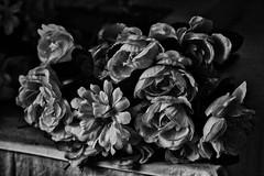 Autumn flowers (Jaime Recabal) Tags: flower blackandwhite monochrome recabal canon 40d blancoynegro