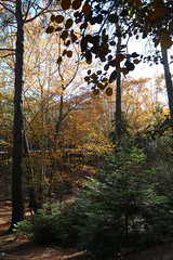 Troodos Geopark (38) (Polis Poliviou) Tags: polispoliviou polis poliviou   cyprus cyprustheallyearroundisland cyprusinyourheart yearroundisland zypern republicofcyprus  cipro  chypre   chipir chipre  kipras ciprus cypr  cypern kypr  sayprus kypros polispoliviou2016 troodosgeopark troodos mediterranean nicosia valley life nature forest historical park trekking hiking winter walking pine pines prodromos limassol paphos fall autumn geopark kakopetria