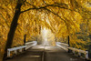 Bridge to Fall III (larsvandegoor.com) Tags: fall bridge trees forest landscape nature yellow autumn foliage larsvandegoor