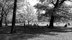 a day at the park (vfrgk) Tags: people littlepeople park nature urbannature centralpark nyc trees treeshade shadows lightandshadows sunny architecture buildings urbanlife urbanphotography urbanfragment monochrome blackandwhite bw tranquil tranquility serenity relaxing relaxation revitalizing crowd