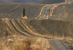Cypress (hbothmann) Tags: toskana tuscany toscana sonnar13518za sonnart18135 a nature