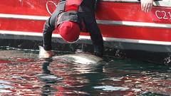 60623194 (QCL Shooter) Tags: qcl haidagwaii bcfishing salmon sportfishing queencharlottelodge fishingfirstclass adventure chinook halibut cr catchrelease