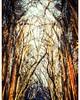les 4 saisons a  l' abbatiale  saint-ouen (jolhan&) Tags: abbatiale spectacle rouen photography photographier photos color saison architecture trucage