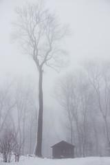 in the snow (ppaschka) Tags: tree baum bume haus house schnee snow wald wood winter nebel fog canon 700d 1855 weis white black schwarz grau gray