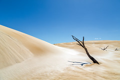 Tree and sand #3 (RWYoung Images) Tags: rwyoung canon 5d3 tree southaustralia sand dune sanddune arid dry
