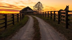 """The Road Less Traveled"" (the_lowe_life) Tags: sky dusk sunsets goldenhour horsefarm gravelroad travel kentuckykicksass bluegrass kentucky nikkor farm barn road fenchorse orange afterglow vibrant color clouds sun d7200 sunset nikon"