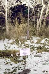 Alexander Gerst (Granmuc) Tags: baikonur cosmonaut alley trees