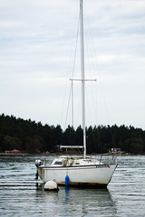 Sails Down (Luna Lupin) Tags: old sail boat algae salt water puget sound abandoned down anchored
