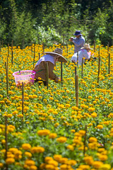 ChiangMai_7903 (JCS75) Tags: asia asie canon thailande thailand chiangmai