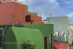 La palma tazacorte old house with dog (mezzotint_de) Tags: lapalma canary island canaries spain spanish volcanic islands canarias buildings house architecture dog green picturesque quaint city town tazacorte village animal mammal old historic ocean water