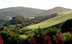 California Hills -Spring (channel locks) Tags: california trees sunlight green grass cows hills 50mmf18d sanjuanbautista nikond7000