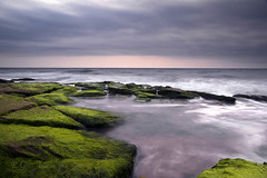 Tranquil Sea (Glenn Anderson.) Tags: ocean sea rock clouds sunrise moss atlantic algae coquina a850
