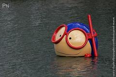 Vasco (Pedro Nogueira Photography) Tags: water agua lisboa lisbon mascot vasco mascote oceanario parquedasnaçoes pedronogueira pedronogueiraphotography