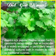 Cilantro is a pungent herb, rich in essential vitamins and an excellent digestive aid. GEt your copy for the best recipes: http://skincare4beauty.com/gk61 (moramo111) Tags: foods high healthy protein