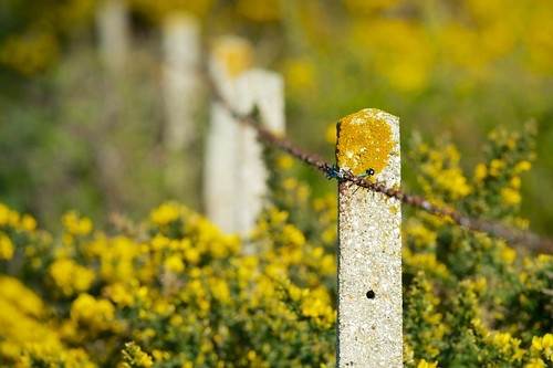 Fence on yellow