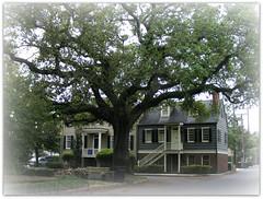 DSCF6635 Savannah (Georgia) (annelies_visser) Tags: trees houses georgia bomen veranda romantic dreamy savannah huizen dromerig romantisch victoriaansehuizen