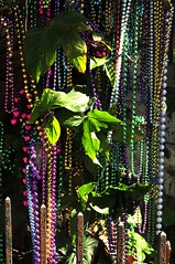 Leaves and beads (RickAbbott) Tags: tree green leaves beads neworleans mardigras