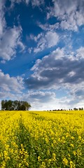 Countryside Colours (James Whitlock Photography) Tags: uk greatbritain blue summer england sky cloud sun tree field sunshine yellow canon spring bright walk farm wide seed sigma rape crop oxford lane 7d april farmer showers 1020 oxfordshire counrtyside