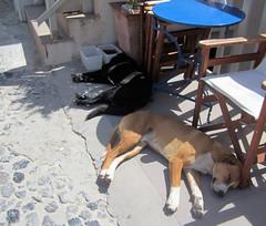 164   Thira - hot dogs (Mark & Naomi Iliff) Tags: greece ελλάδα santorini σαντορίνη thira θηρα dogs thera fira ελλαδα