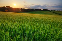Setting sun over Barton's Farm (Rich2012) Tags: uk england countryside britain farm country hampshire fields winchester dri hdr bartons hants