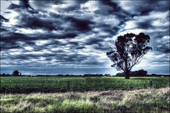 Field (mynameisjimmy79) Tags: tree field grass canon fence high dynamic map farm country australia victoria range tone hdr 600d nagambie tonemapped