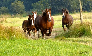 Let's go fast to see the new pasture!