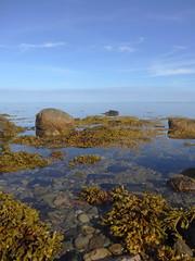 Salty (Bricheno) Tags: seaweed island scotland clyde rocks escocia estuary brodick arran isleofarran szkocja firth schottland scozia cosse firthofclyde  esccia  scotlandinminiature  bricheno scoia