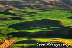 Palouse Greens (Coop Photography) Tags: sunset green photography 1 washington spring nikon butte afternoon hills april wa coop eastern palouse steptoe d90 2013