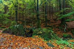 Silbertal (reloeh) Tags: canon germany deutschland photography natur nrw geo nordrheinwestfalen landschaften silbertal flus hornbadmeinberg