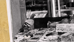 Ein Rosinenbrtchen, bitte !! (TouTouke - Nightfox) Tags: city wild urban food white cold cute bird window nature beautiful beauty weather animal shop horizontal season bread toy peace symbol pigeon dove wildlife wing beak feather warmth need desolate cereals