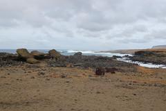 IMG_1226 (Jarod Burns) Tags: ruins moai easterisland rapanui anakena ahutongariki ranoraraku