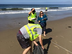 ESRM sandy beach monitoring El Capitan State Beach 05-20-15f